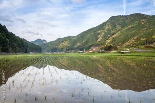Garden Poster Rice fields Terraced rice field at Maruyama Senmaida , Kumano City, Mie Prefecture , Japan
