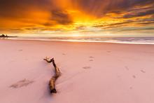 A Driftwood Log Lies On The Beach Under An Amazingly Beautiful And Intense Golden Sunrise In Australia.