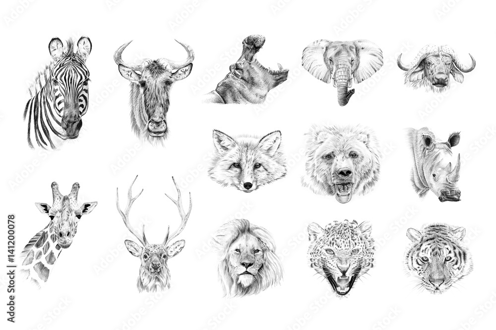 Fototapeta Portrait of animals drawn by hand in pencil