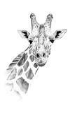 Portret żyrafa rysowane ręcznie ołówkiem - 141200090