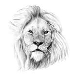Portret rysowane ręcznie ołówkiem lew - 141200093