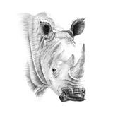 Portret nosorożec rysowane ręcznie ołówkiem - 141200094