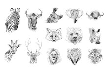 Portrait Of Animals Drawn By H...