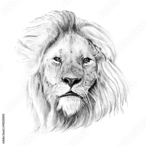 Valokuvatapetti Portrait of lion drawn by hand in pencil