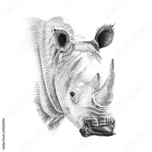 Naklejka premium Portrait of rhino drawn by hand in pencil