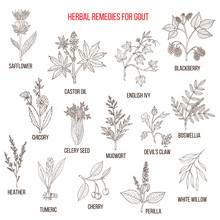Collection Of Natural Herbs For Gout