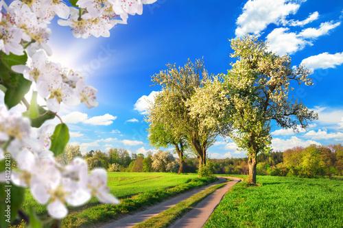 Fototapeta Raj na wiosnę, idylliczny krajobraz z kwiatami, drzewami, łąką, błękitem nieba i słońcem