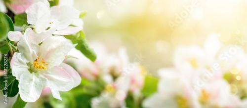 Foto-Schiebegardine ohne Schienensystem - Apfelblüten in verträumten Sonnenlicht, Panorama Format mit Freiraum (von Smileus)