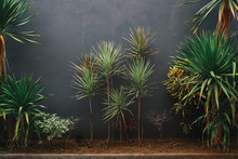 Green Plants And Palms Against Grey Concrete Wall With Texture, Indonesia, Bali