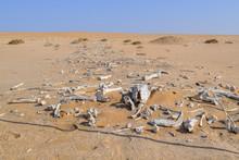 Desert With Animal Bones
