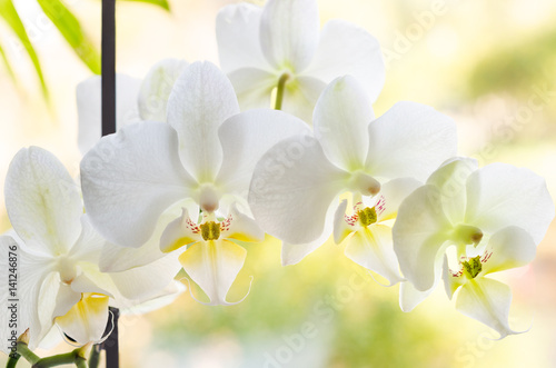 Canvas Print orchid flower