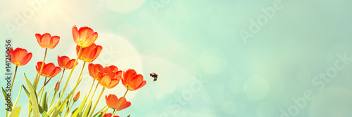 Stampa su Tela Red Tulips and Bumblebee
