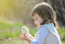 Girl With A Chick On His Arm. Selective Focus.