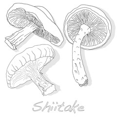 Shiitake mushroom vector illustration