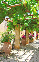 FototapetaPergola of grapes in the patio Greece Crete