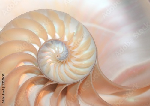 nautilus shell section background symmetry Fibonacci half cross section spiral shell golden ratio number sequence copy space stock photo photograph