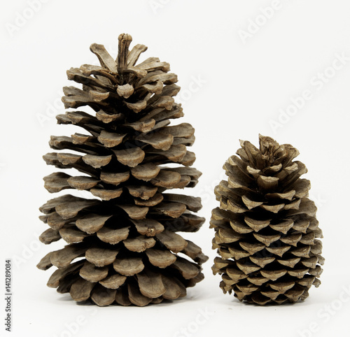 Fotografie, Obraz  Two different sized pine cones standing against a white background