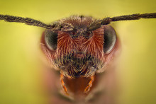 Extreme Magnification - Ant Queen Portrait