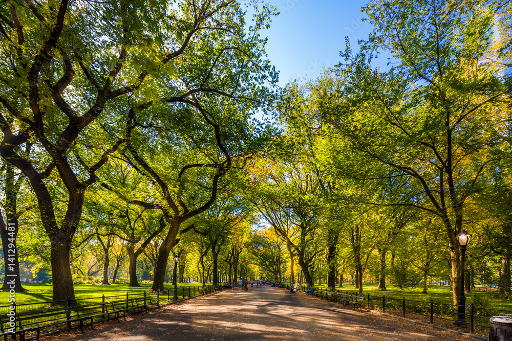Fototapeta Beautiful park in beautiful city..Central Park. The Mall area in Central Park at autumn., New York City, USA