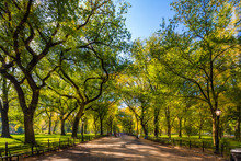 Beautiful Park In Beautiful City..Central Park. The Mall Area In Central Park At Autumn., New York City, USA