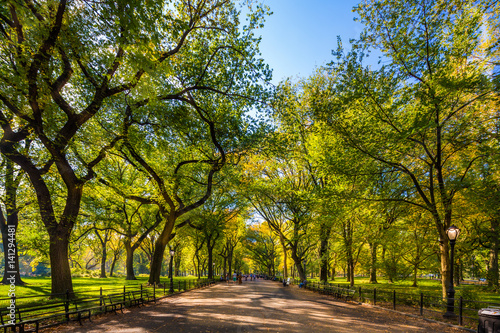Fototapeta Beautiful park in beautiful city..Central Park. The Mall area in Central Park at autumn., New York City, USA obraz