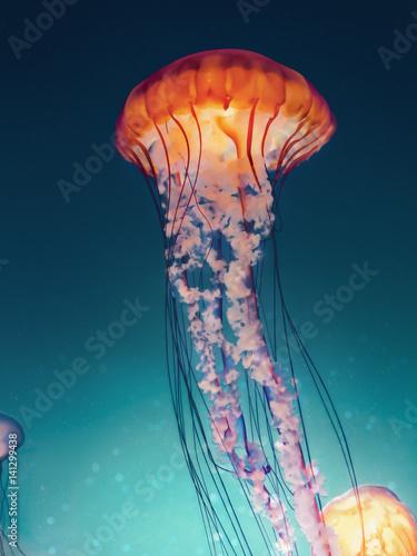 Cross processing jellyfish Wall mural