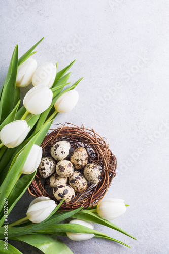 Beautiful white tulips with quail eggs in nest on light gray stone background Canvas Print