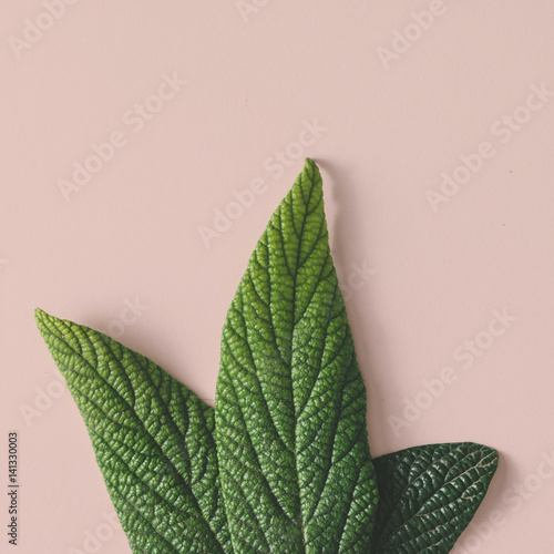 Creative minimal arrangement of leaves on pastel background. Flat lay. Nature concept.