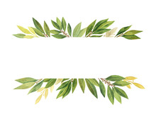 Watercolor Bay Leaf Isolated On White Background.