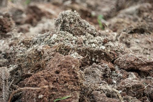 Fotografie, Obraz  Terra smossa closeup