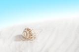 Fototapeta Fototapety z morzem do Twojej sypialni - Spacerując po nadmorskiej plaży, szczególnie po sztormie, można spotkać wiele skarbów, jednym z nich są muszelki.