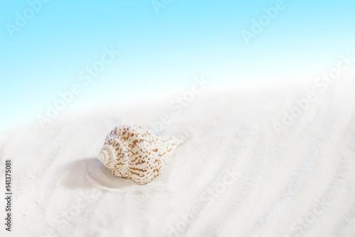 Spacerując po nadmorskiej plaży, szczególnie po sztormie, można spotkać wiele skarbów, jednym z nich są muszelki. - 141375081