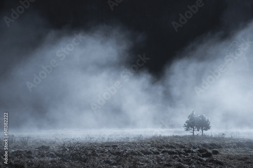 Couple of pine tree in the mystery fog, Yosemite National Park, California USA Fototapeta