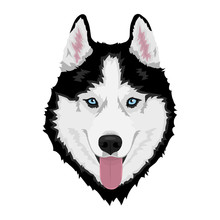 Black And White Siberian Husky With Blue Eyes And Sticking Out Tongue. Hand Drawn Portrait Of Dog. Vector Illustration