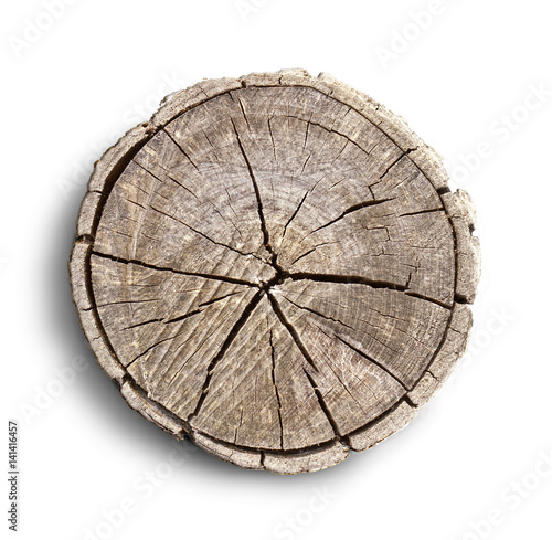 With The Grain Haircut: Smooth Cross Section Brown Tree Stump Slice With Age Rings