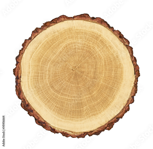 Photo Stands Wood smooth cross section brown tree stump slice with age rings cut fresh from the forest with wood grain isolated on white