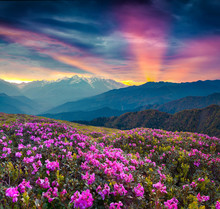 Colorful Summer Landscape With...