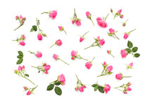 Small Pink Roses On A White Ba...