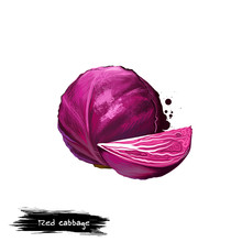 Red Cabbage Illustration Isolated On White. Whole Purple Vegetable And Piece. Violet Flesh, Organic Vegetarian Healthy Food. Digital Art With Paint Splashes Effect. Graphic Clip Art For Design.