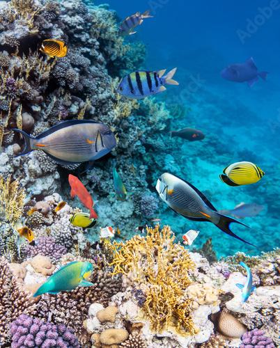 Kolorowe rafy koralowe Morza Czerwonego.