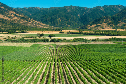 Obraz Colchagua Valley - fototapety do salonu
