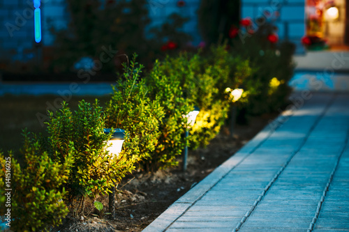 Poster Jardin Night View Of Flowerbed With Flowers Illuminated By Energy-Savin