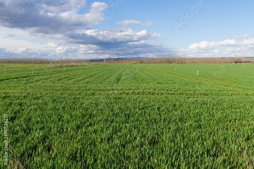 Campos verdes de Cereales  con sistema de Riego por Aspersion y arboledas de cho Canvas Print