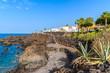 Tropical plants on coastal promenade along ocean in San Juan town, Tenerife island, Spain