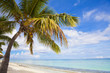 Mauritius, exotic beach with palm trees, travel destination