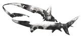 czarno-biały obraz monochromatyczny z wodą i tuszem rysować rekin - 141554634