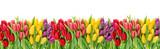 Fototapeta Tulipany - Tulip flowers water drops Floral banner