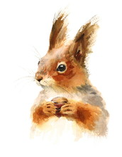 Watercolor Squirrel Holding A ...