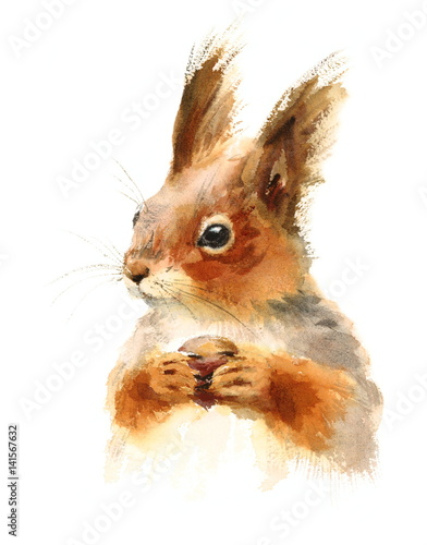 Cuadros en Lienzo  Watercolor Squirrel Holding a Nut - Hand Drawn Illustration of Animal isolated o