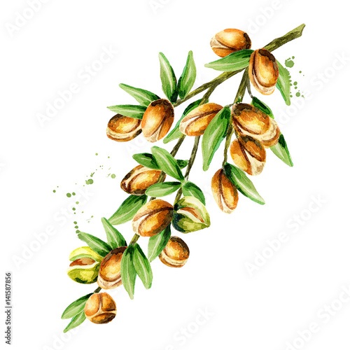 Branch of the argan tree, can be used as a design element for the decoration of cosmetic or food products using argan oil Wallpaper Mural